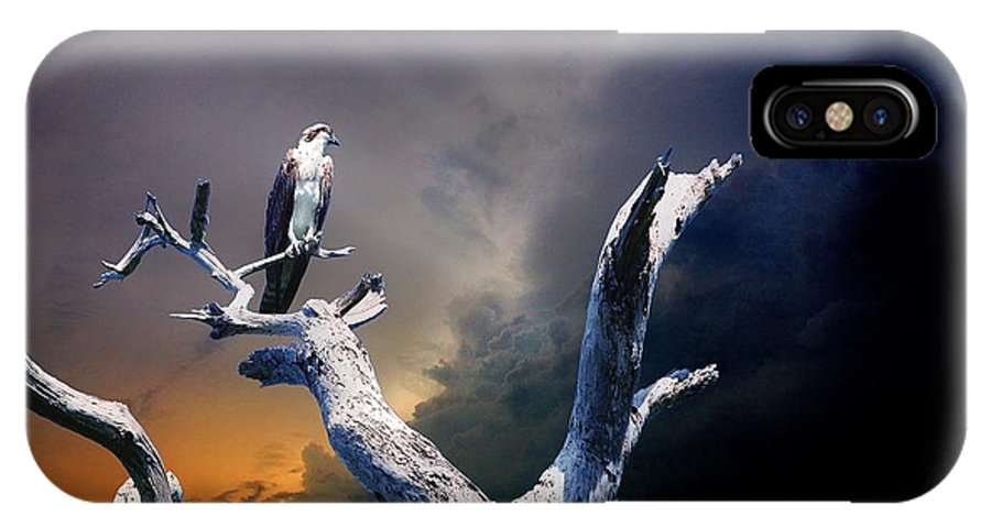 Osprey IPhone X Case featuring the photograph Osprey by Mal Bray