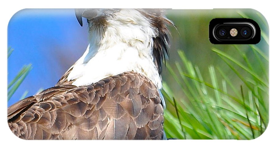 Osprey IPhone X / XS Case featuring the photograph Osprey Profile by MCM Photography