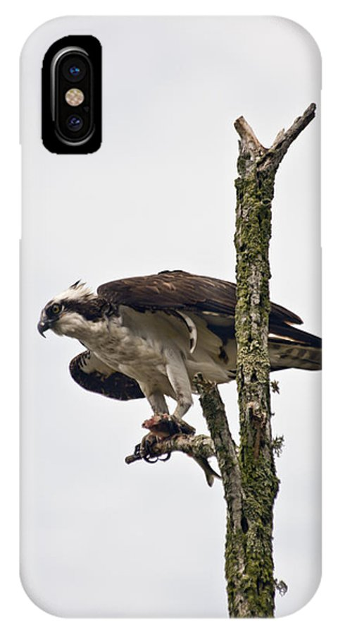 Osprey IPhone X Case featuring the photograph Osprey With Fish 2 by Dennis Coates
