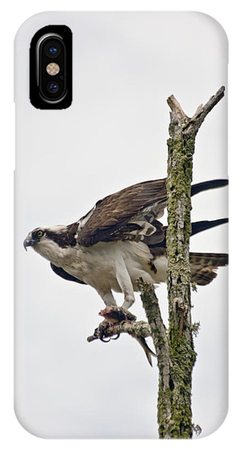Osprey IPhone X Case featuring the photograph Osprey With Fish 3 by Dennis Coates