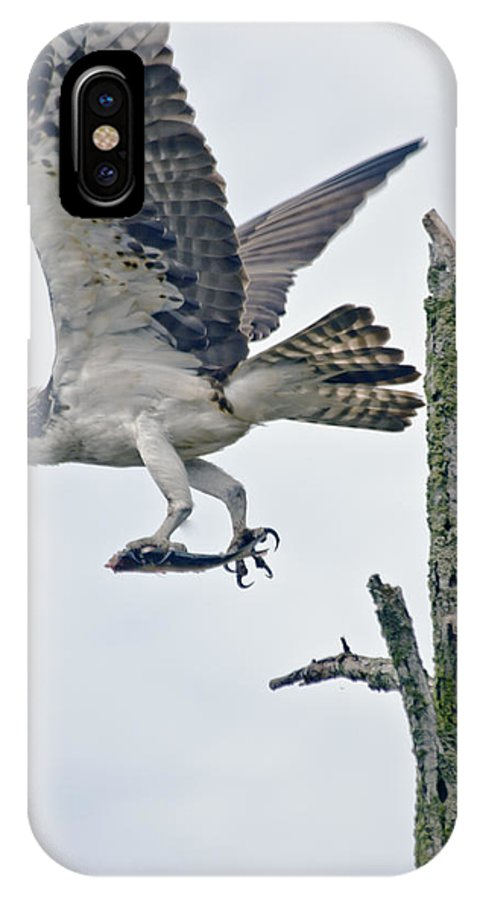 Osprey IPhone X Case featuring the photograph Osprey With Fish by Dennis Coates