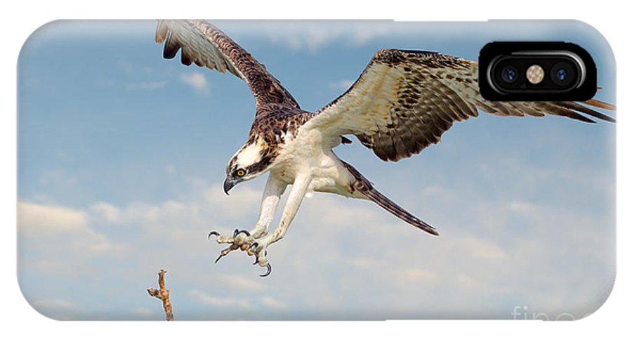 Osprey IPhone X Case featuring the photograph Osprey With Talons Extended by Jerry Fornarotto