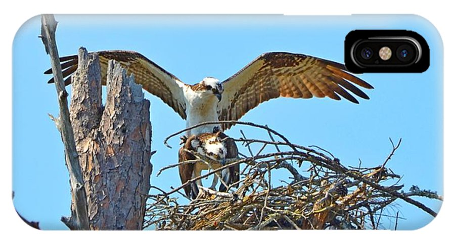 Ospreys IPhone X Case featuring the photograph Ospreys Copulating In New Nest2 by Jeff at JSJ Photography