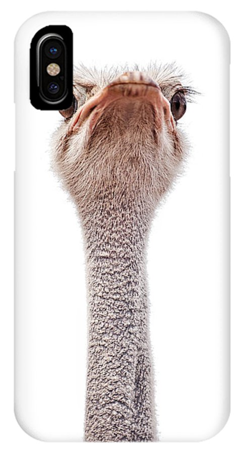 Animal IPhone X Case featuring the photograph Ostrich by Leslie Banks