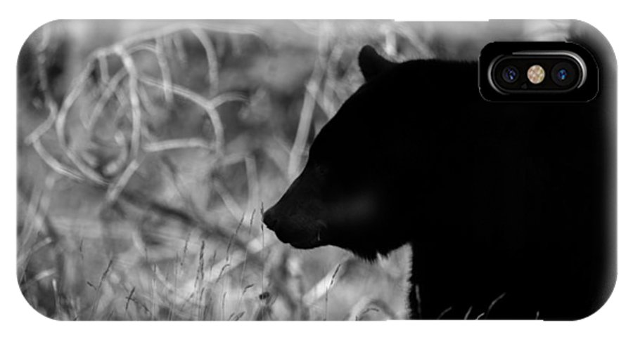 Wildlife IPhone X Case featuring the photograph Out Of The Shadows by Kevin Dietrich