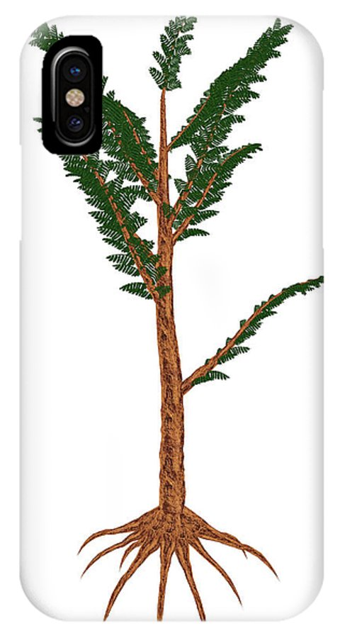 Tree IPhone X Case featuring the photograph Pachypteris Prehistoric Plant by Elena Duvernay