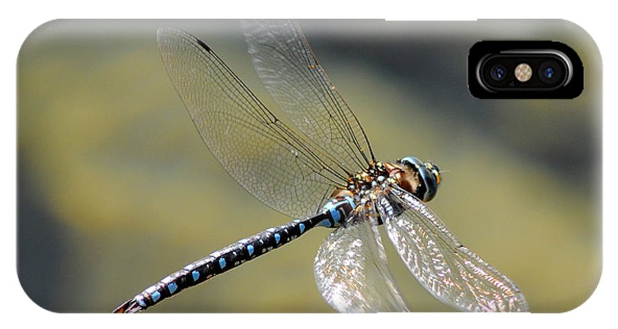 Wildlife IPhone X Case featuring the photograph Paddletail Darner In Flight by Vivian Christopher