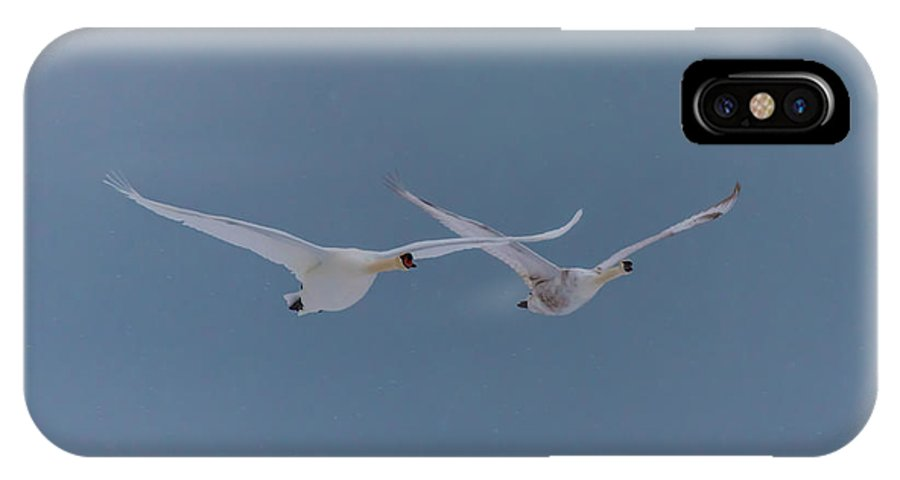 Pair IPhone X Case featuring the photograph Pair Of Flying Swans Against A Blue Sky by Ray Sheley