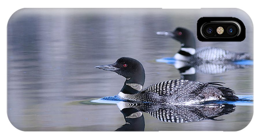 Loon IPhone X Case featuring the photograph Pair Of Loons by Gord Patterson