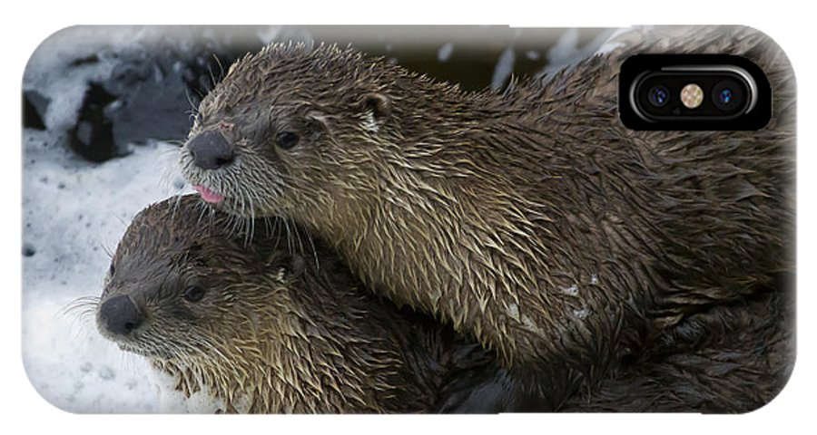 Otter IPhone X Case featuring the photograph Pair Of River Otters  #1301 by J L Woody Wooden