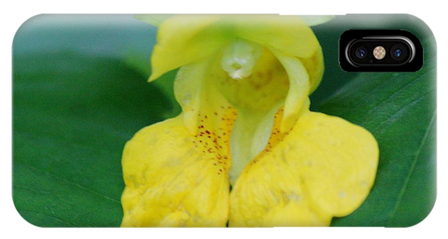 Pale Jewelweed IPhone X Case featuring the photograph Pale Jewelweed by Brian Lucia