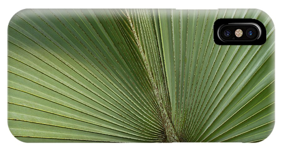 Belize IPhone X Case featuring the photograph Palm, Belize Botanic Garden by William Sutton