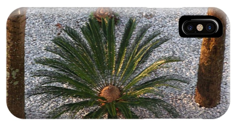 Palm Tree IPhone X Case featuring the photograph Palm Spray by Gail Matthews