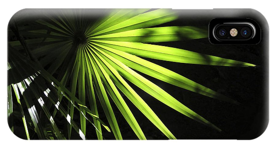 Palmetto IPhone X / XS Case featuring the photograph Palmetto And Rays by Marilyn Hunt