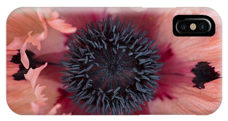 Papaver Orientale IPhone X Case featuring the photograph Papaver Orientale Pink Ruffles by Tim Gainey