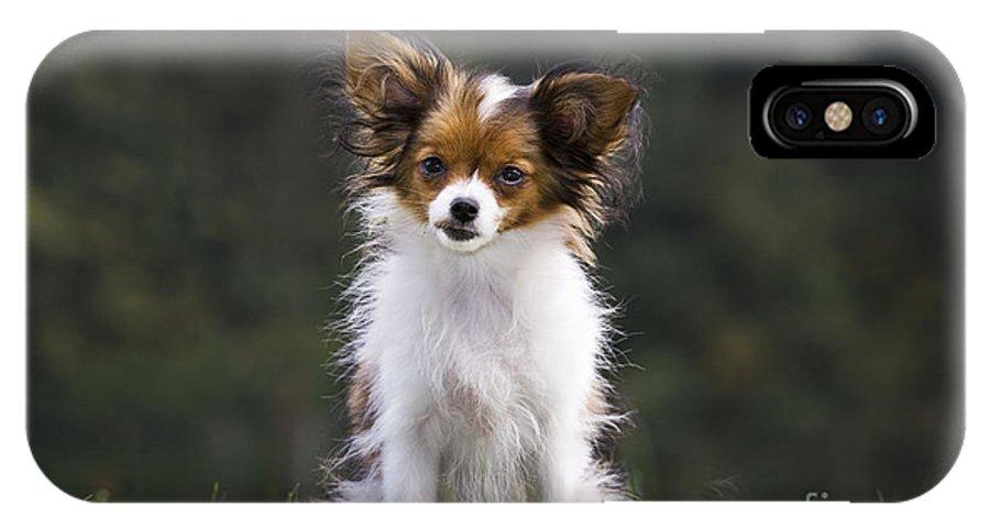 Papillon IPhone X / XS Case featuring the photograph Papillon Dog by Johan De Meester