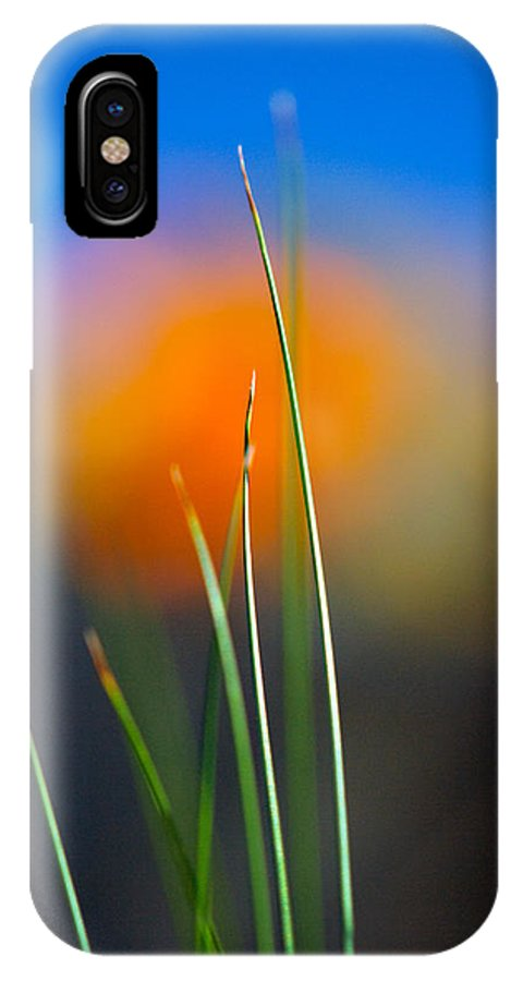 Flora IPhone X Case featuring the photograph Papyrus by Joe Schofield