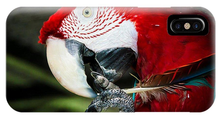 Parrot IPhone X Case featuring the photograph Parrot by Jason Khan
