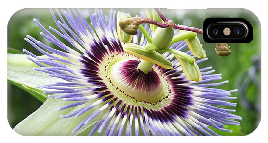 Passion Flower IPhone X Case featuring the photograph Passion by Terri Waselchuk