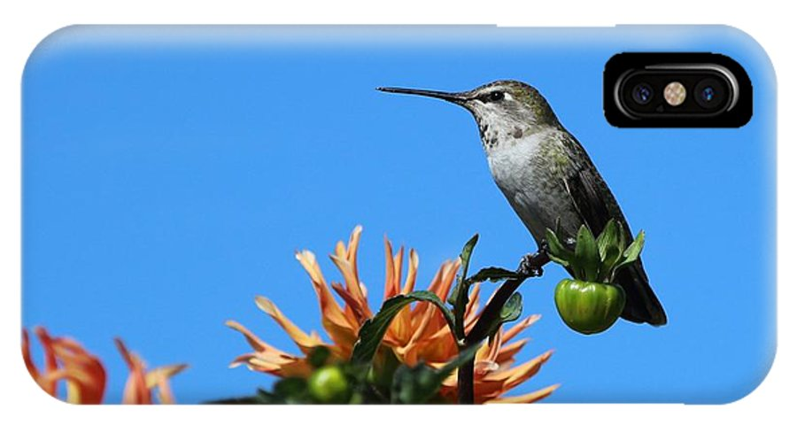 Nature IPhone X Case featuring the photograph Patience by Pamela Weston