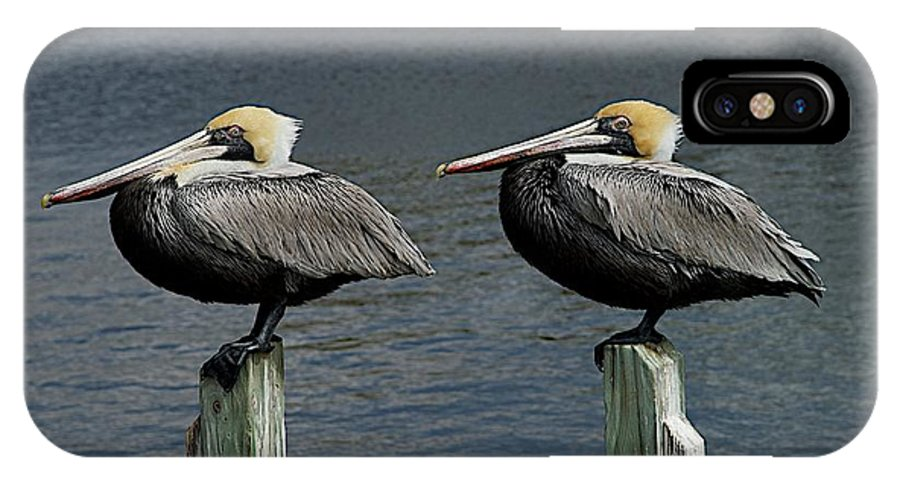 Birds IPhone X / XS Case featuring the photograph Patient Pair by Joseph Yarbrough