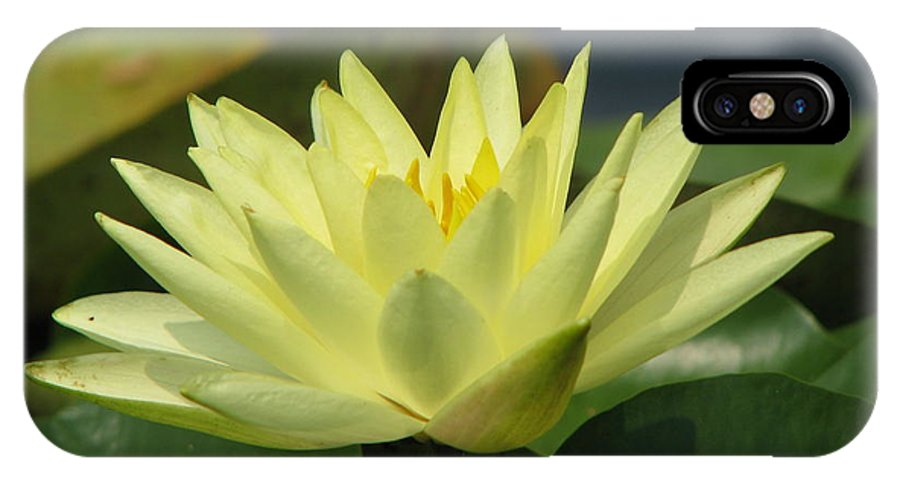 Lillies IPhone X Case featuring the photograph Peace by Amanda Barcon