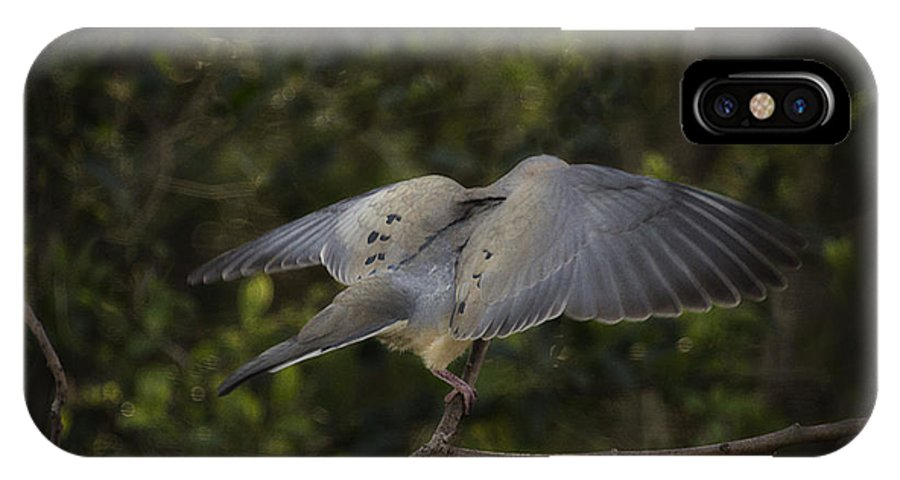 Bird IPhone X Case featuring the photograph Peace by Cris Hayes