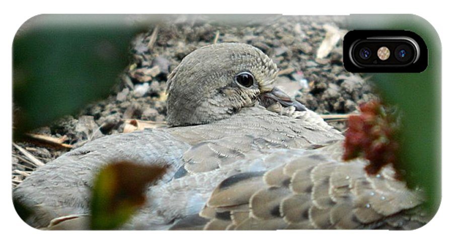 Mourning Dove IPhone X Case featuring the photograph Peace by Terri Waselchuk