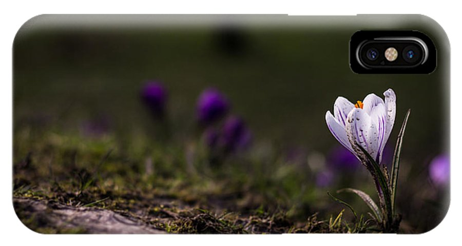 Crocus IPhone X Case featuring the photograph Peacefully by Arianna Petrovan