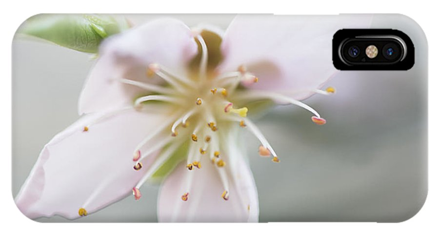 Peach Blossom IPhone X Case featuring the photograph Peach Blossom 004 by Phil Rispin