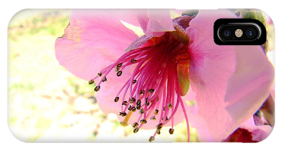Flower IPhone X Case featuring the photograph Peach Blossom by Eva Kato