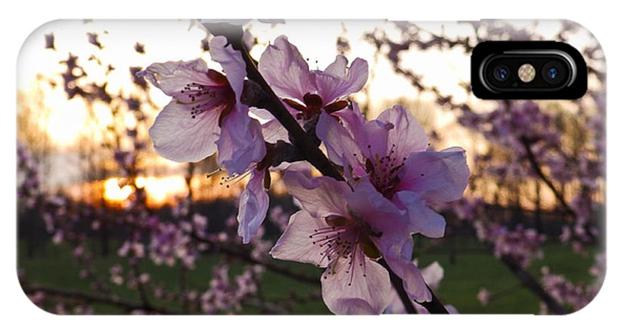 Peach IPhone X Case featuring the photograph Peachy Sunset 2014 #2 by Nick Kirby