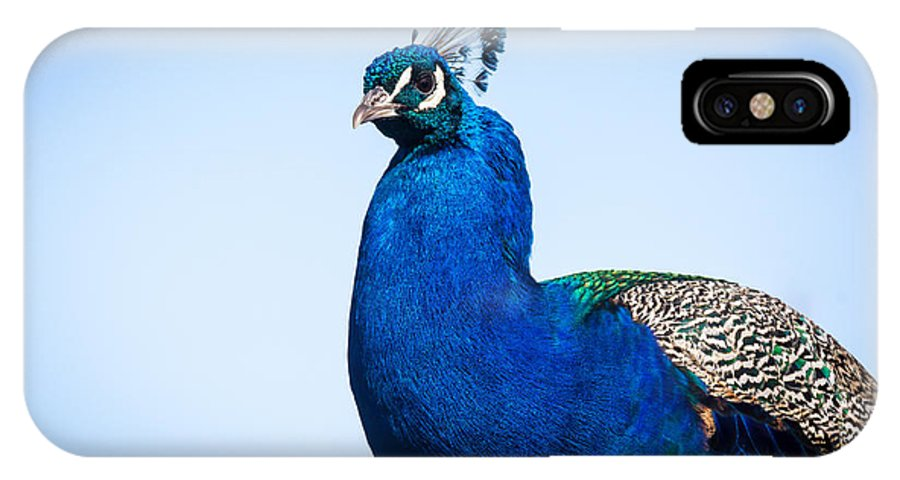 South Dakota IPhone X Case featuring the photograph Peacock 1 by M Dale
