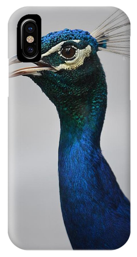 Peacock IPhone X Case featuring the photograph Peacock by Alex King