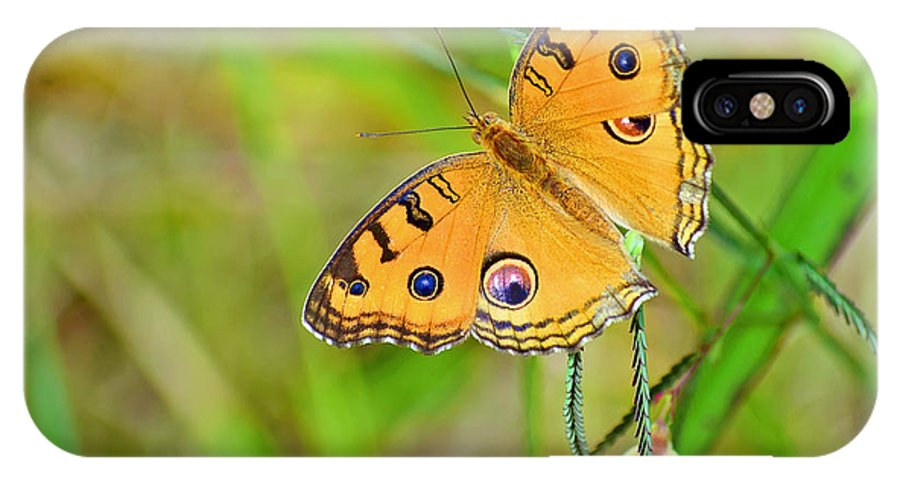 Butterfly; Insect; Wing; Nature; Beauty; Bright; Beautiful; Lepidoptera; Yellow; Summer; Colorful; Bug; Closeup; Color; Fly; Animal; Spring; Green; Vibrant; Pretty; Fragile; Wildlife; Environment; Orange; Peacock Pansy; Arthrpoda; Hexapoda; Hexapod; Arthropod; Mimicry; Mimic; Zoology; Entomology; Grass IPhone X Case featuring the photograph Peacock Butterfly by Image World