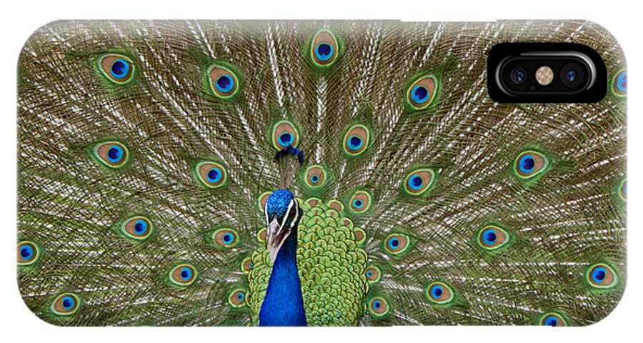 Bird IPhone X Case featuring the photograph Peacock by Ernie Echols
