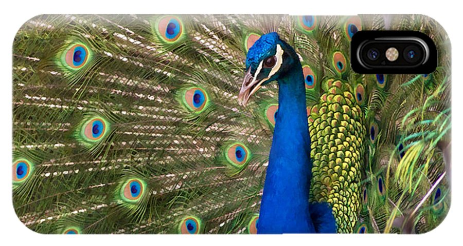 Peacock IPhone X Case featuring the photograph Peacock by Guillermo Rodriguez