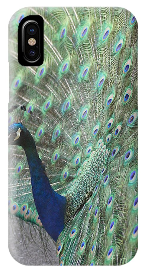 Peacocks IPhone X Case featuring the photograph Peacock by Jeffery L Bowers