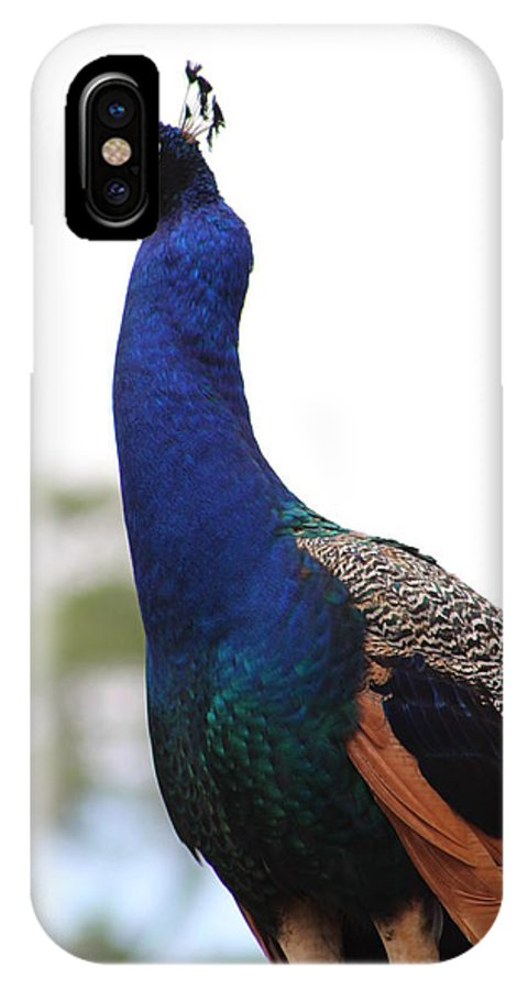 Peacock IPhone X Case featuring the photograph Peacock by Karla Corbin