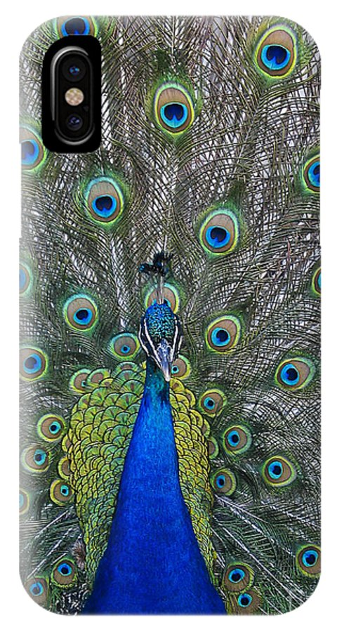 Peacock IPhone X Case featuring the photograph Peacock by Steven Ralser