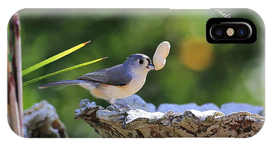 Peanut Up By Tufted Titmouse IPhone X Case featuring the photograph Peanut Up by PJQandFriends Photography