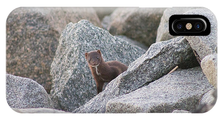 American Mink IPhone X Case featuring the photograph Peek-a-boo by Jessica Brown