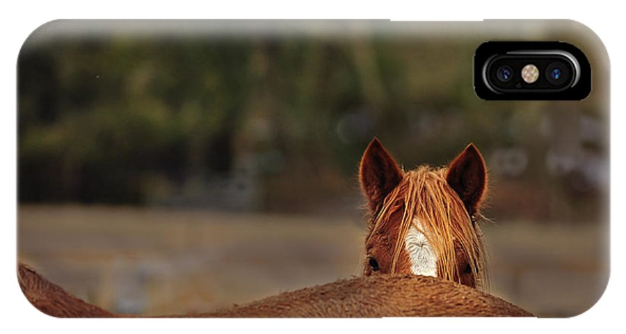 Horse IPhone X Case featuring the photograph Peek A Boo by Kevan Garecki