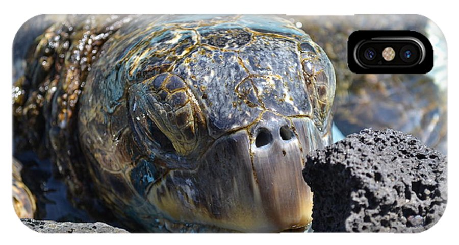 Turtle IPhone X Case featuring the photograph Peek-a-boo Turtle by Amanda Eberly-Kudamik