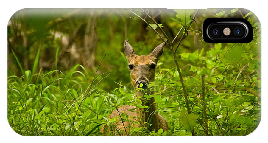 Deer Photographs IPhone X Case featuring the photograph Peeking Deer by Vernis Maxwell
