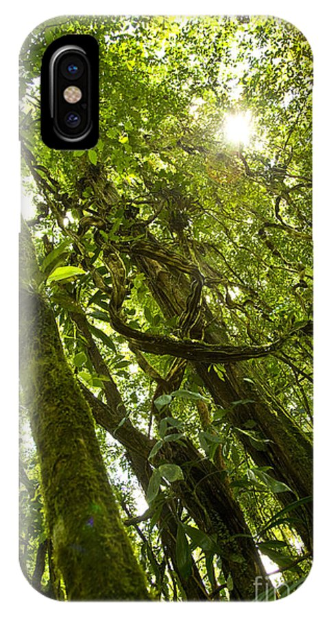 Trees IPhone X Case featuring the photograph Peeking In Costa Rica Rain Forest by Thomas Levine