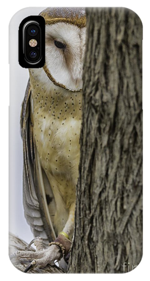 Barn Owl IPhone X / XS Case featuring the photograph Peeking by Michael Goodell