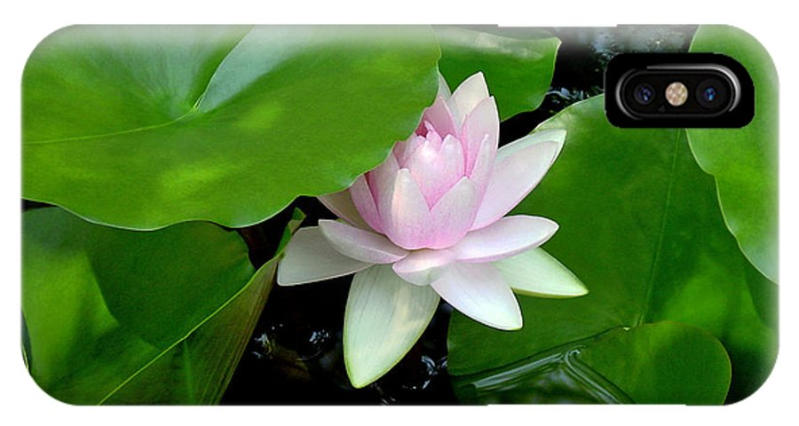 Water Lily IPhone X Case featuring the photograph Peeking Out by Suzanne Gaff