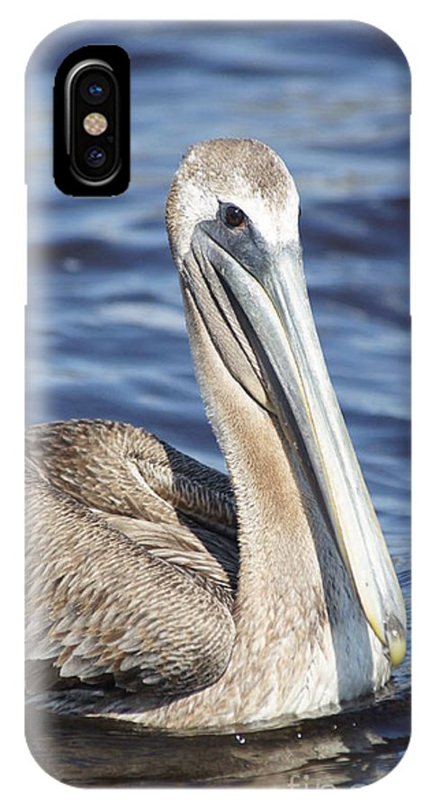 Birds IPhone X Case featuring the photograph Pelican by Evelyn Hill