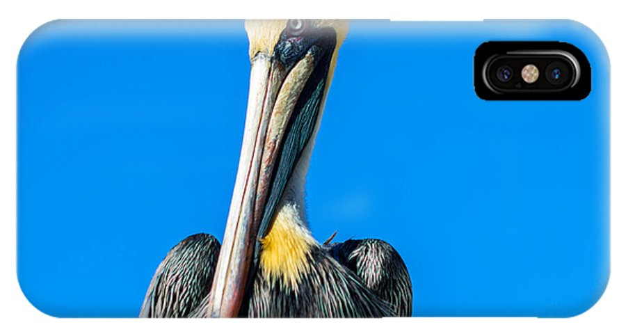 Pelican IPhone X Case featuring the photograph Pelican In Key Largo by George Kenhan